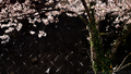 御殿場NEXCOの桜_210327
