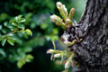 庭風景-柏の芽吹きと蔓薔薇の新芽_210409