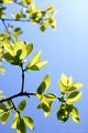 庭風景-柿の新緑_210412