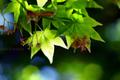 庭風景-カエデの木陰_210419
