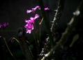 庭風景-オキザリス_210503