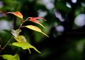 庭風景-梅の新枝_210507