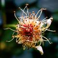 庭風景-黄バラの残したもの_210512
