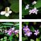 庭風景-小さな花たち_210524