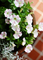 庭風景-サフィニア・アートももいろハート_210525