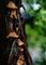 雨の庭風景-キクラゲ_210527
