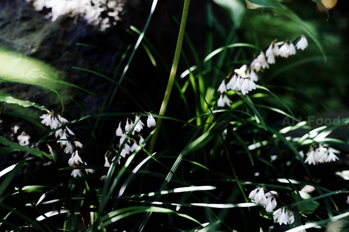 庭風景-ヤブラン_210609