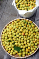 梅の収穫_210613
