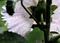 庭風景-タチアオイの後ろ姿_210618