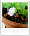 庭風景-ももいろハートにキノコ_210615