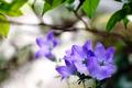 庭風景-桔梗_210627