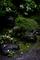 雨の庭風景_210703