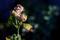 タチアオイの種子苞_210805