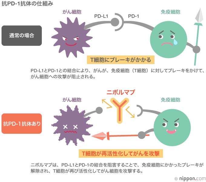 がん免疫療法w:400