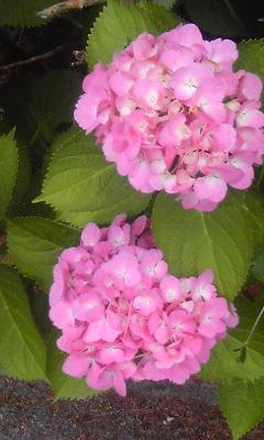 f:id:artoy1:20120605080614j:image:right