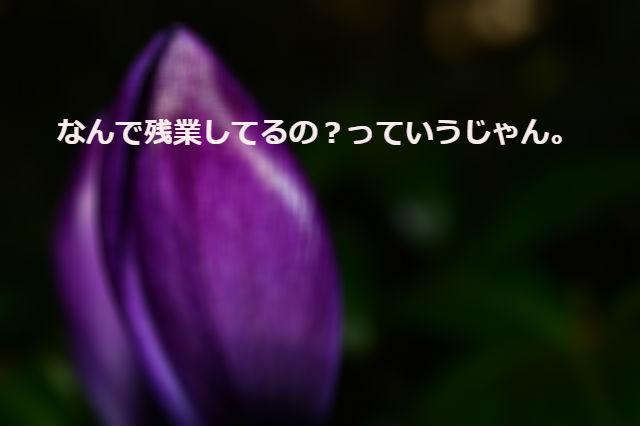 f:id:arufred45Hoo:20170829003711j:plain