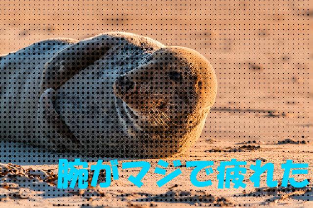 f:id:arufred45Hoo:20180129031145j:plain