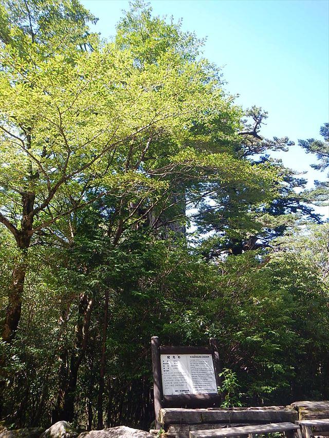 f:id:arukizuki:20170713025402j:plain