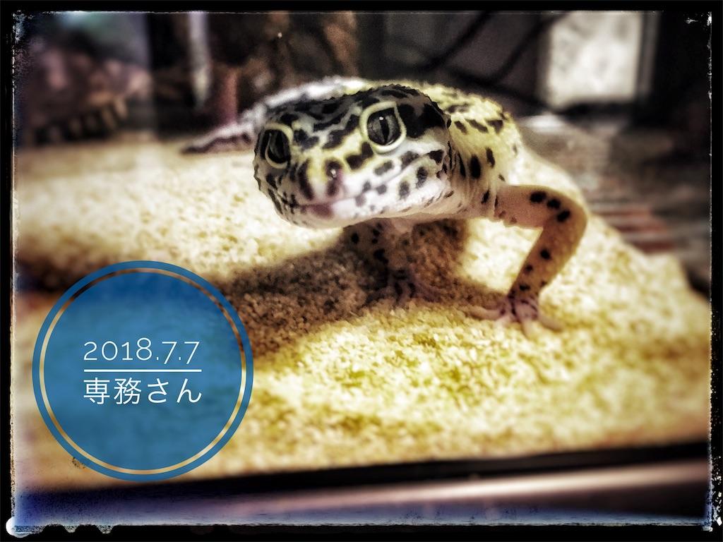 f:id:arukublog:20180721223327j:image