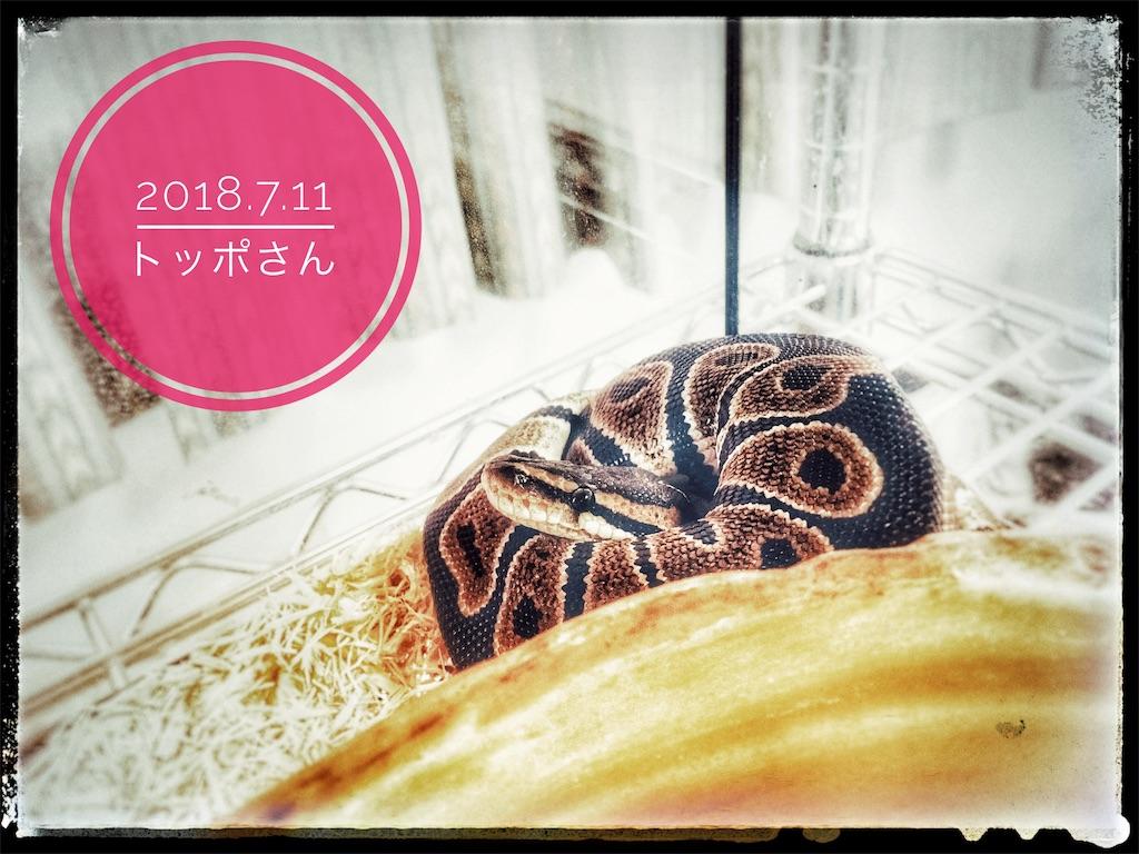 f:id:arukublog:20180721223416j:image