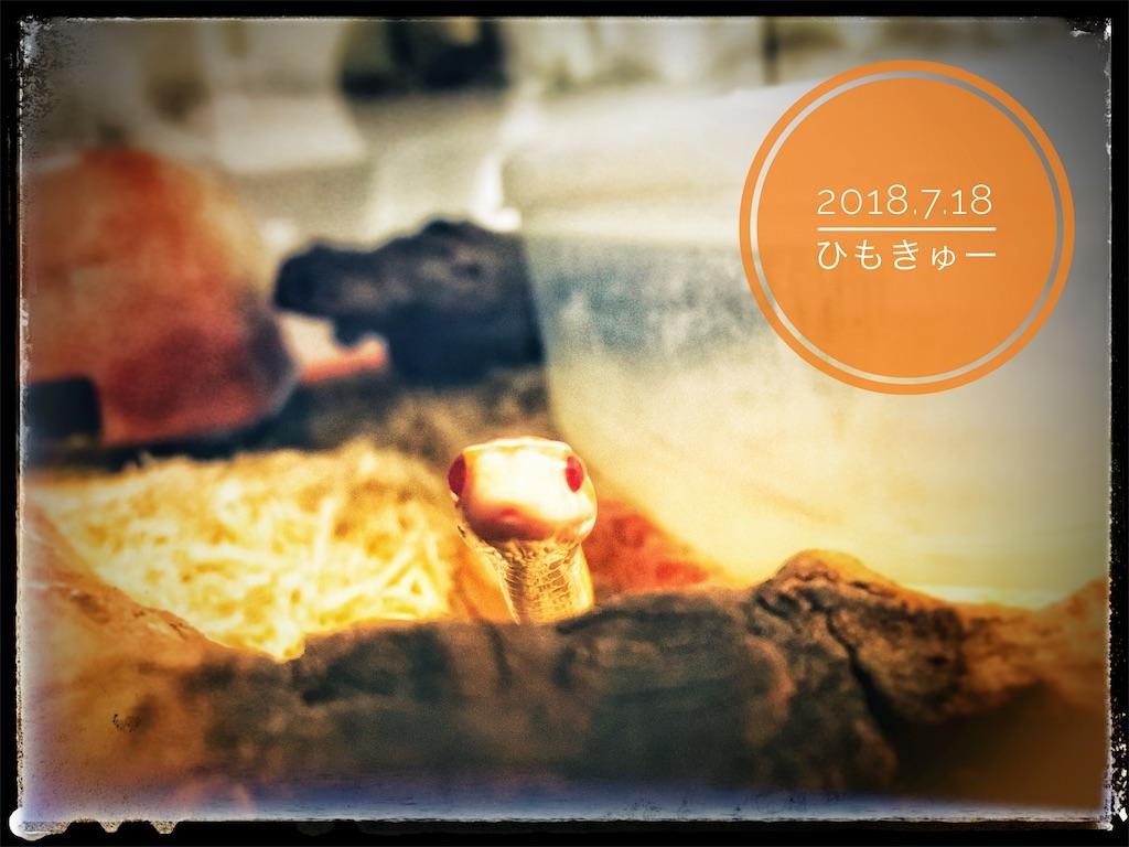 f:id:arukublog:20180721223429j:image
