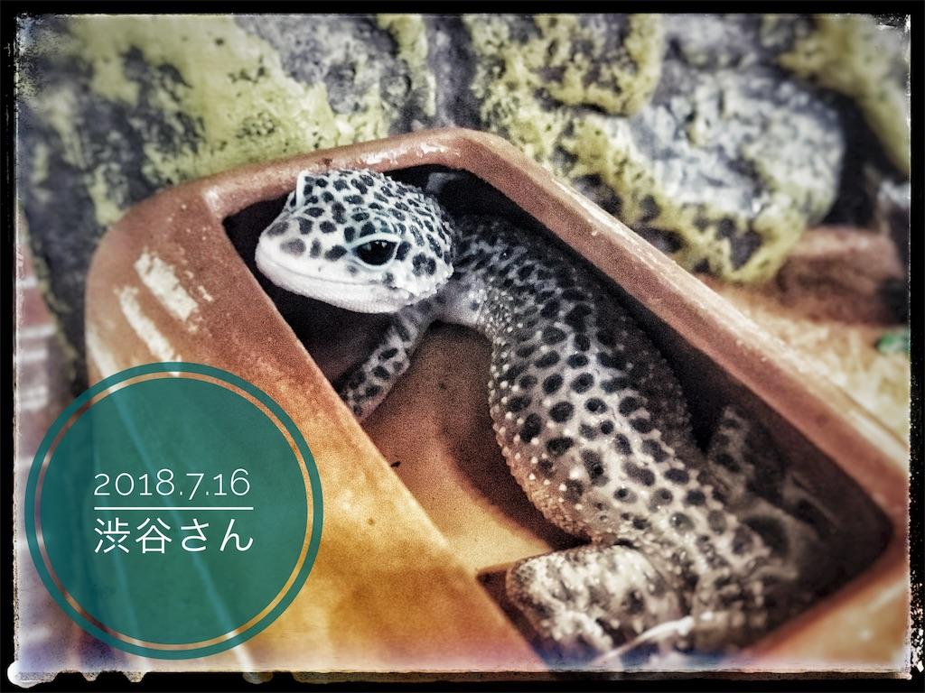 f:id:arukublog:20180721223441j:image