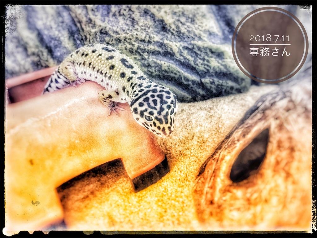 f:id:arukublog:20180721223455j:image