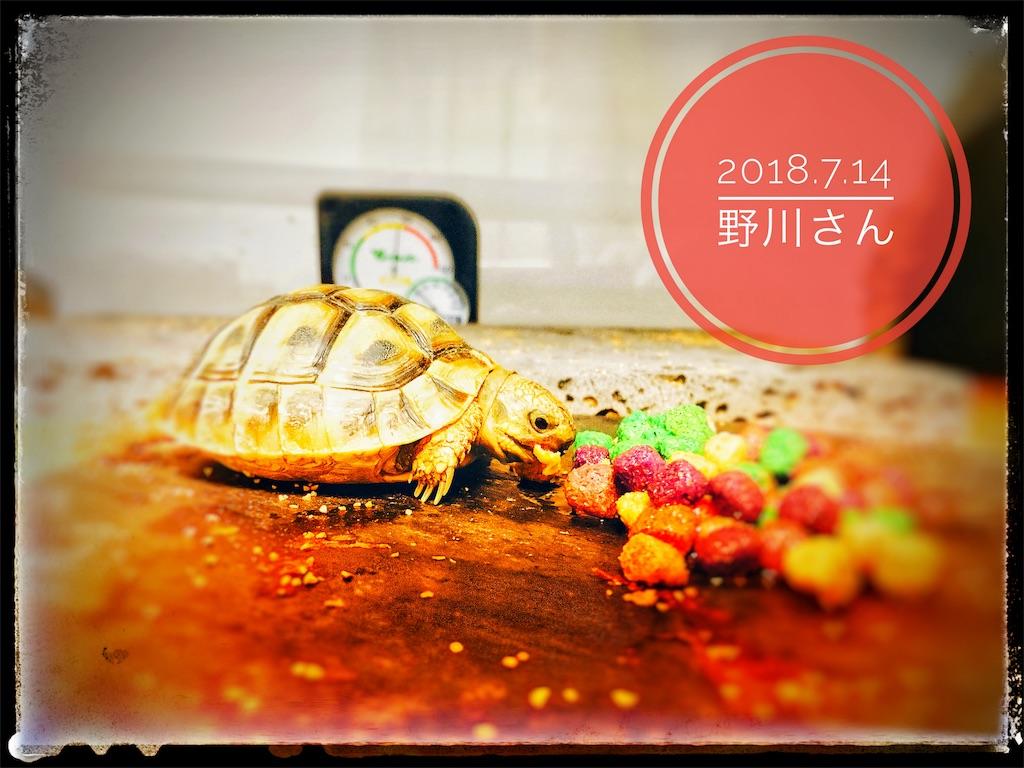 f:id:arukublog:20180721223503j:image