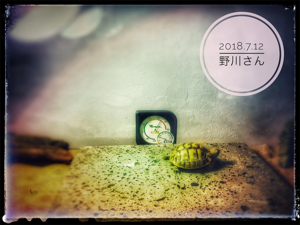 f:id:arukublog:20180721223512j:image