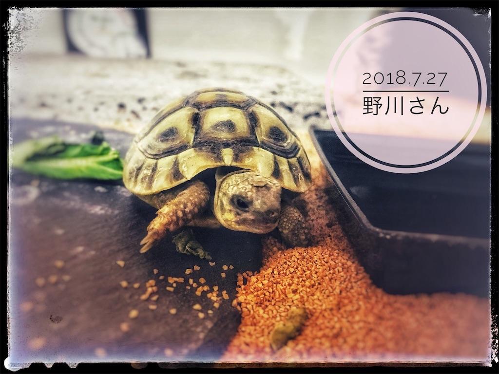 f:id:arukublog:20180729233335j:image