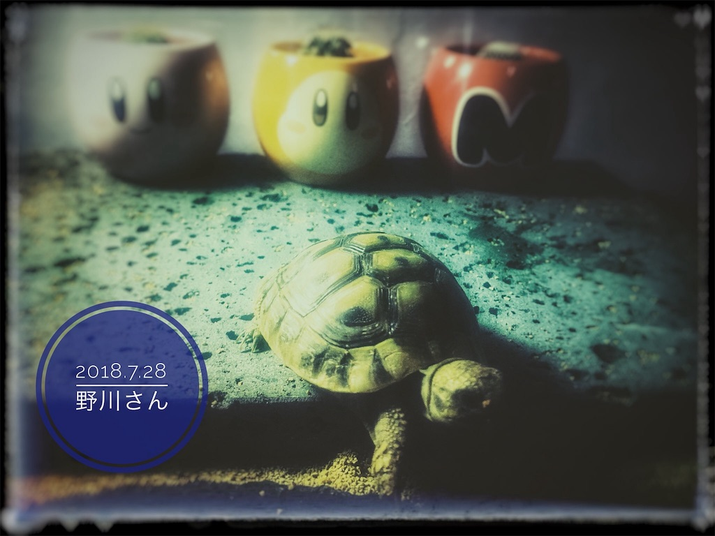 f:id:arukublog:20180729233343j:image