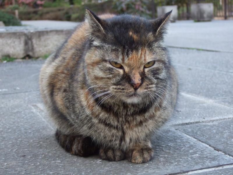 個別「横浜公園野良猫」の写真、画像 - aryarya's fotolife