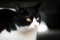 [猫]白黒野良