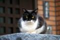 [猫]白黒