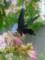 ネムノキの花とアゲハチョウ