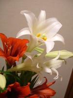 f:id:asacafe:20070608043736j:image