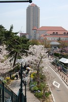 f:id:asacafe:20080405003214j:image:right