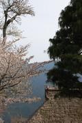 f:id:asacafe:20080416032946j:image:left