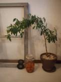 f:id:asacafe:20100317050306j:image