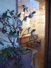 f:id:asacafe:20100320003632j:image