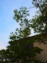 f:id:asacafe:20100503033840j:image