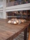 f:id:asacafe:20100507010452j:image