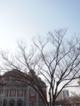 f:id:asacafe:20110206015802j:image:right