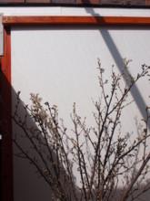 f:id:asacafe:20110228023146j:image