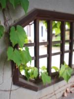 f:id:asacafe:20110501010805j:image