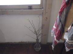 f:id:asacafe:20120504013532j:image
