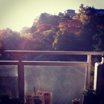 f:id:asacafe:20121121085732j:image