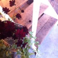 f:id:asacafe:20140218173828j:image