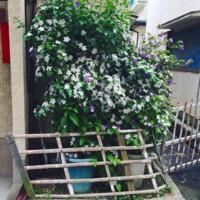 f:id:asacafe:20150520100026j:image