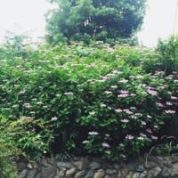 f:id:asacafe:20150618223136j:image